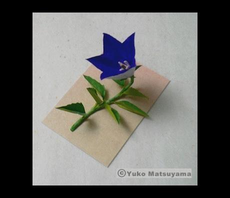 kikyou-s