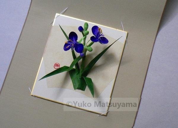 murasaki-tuyukusa-14-s