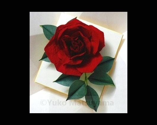 rose-15-