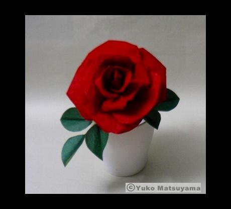 rose-s-9eb76
