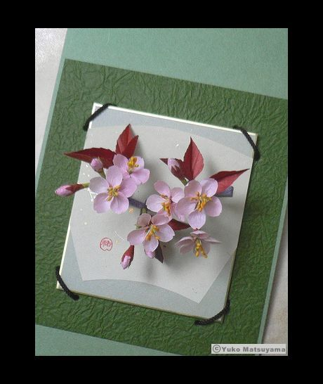 sakura-sikishi-12-1-s