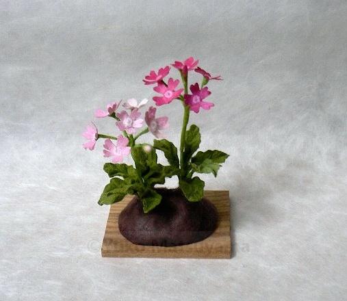 sakurasou-sikisai