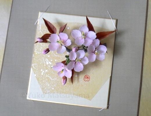 shikihsi-sakura-1
